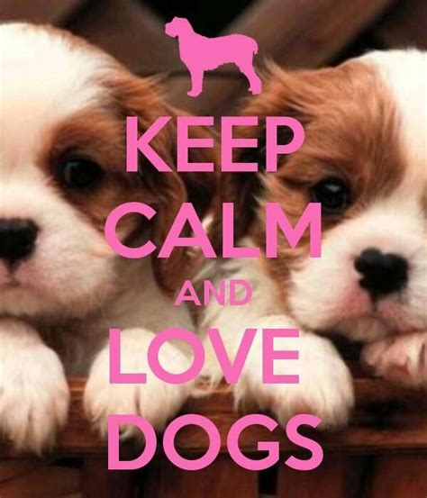 puppy calming 24 best images about dogs on bulldog puppies bulldog puppies and pets