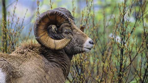 imagenes impresionantes animales salvajes las mejores fotos de animales salvajes im 225 genes