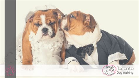 Wedding Attire For Dogs by Ways To Dress Up Your For A Wedding Wedding Attire