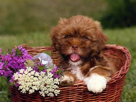 good house dogs free puppies good home to dog dog breeds picture