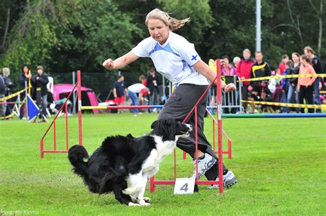 one mind dogs onemind dogs agility handling techniques onemind dogs