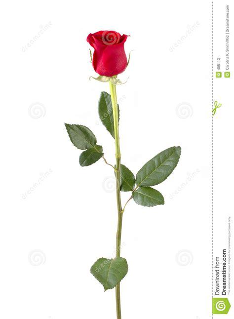 long stem rose stock image image of date alone petals