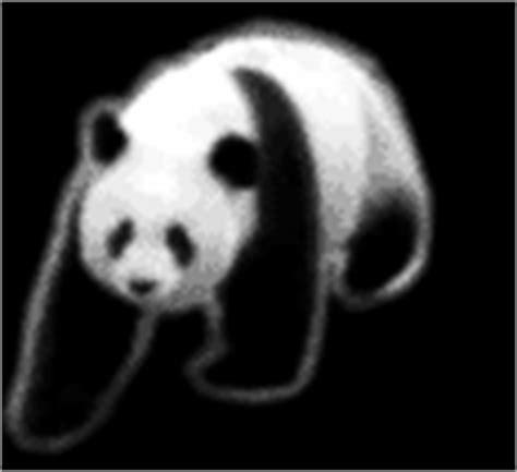 Boneka Panda Panda Hitam Putih Gigit Bambu gambar panda bergerak kartun panda lucu