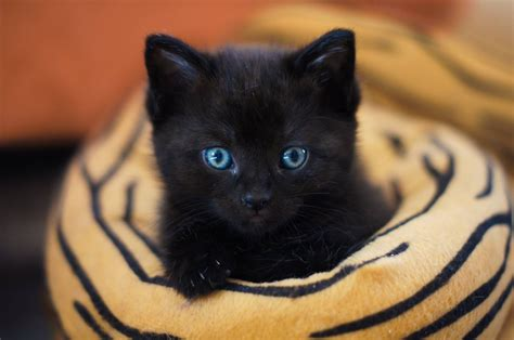 Set Black Cat Hdm the heartwarming reason are adorable selfies with their black cats