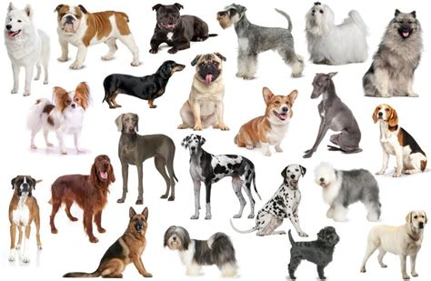 breed test find the breeds quiz