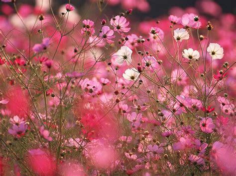 autumn flower flowers by season spring flowers winter flowers summer