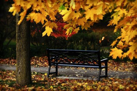 autumn park bench pics for gt park bench photography