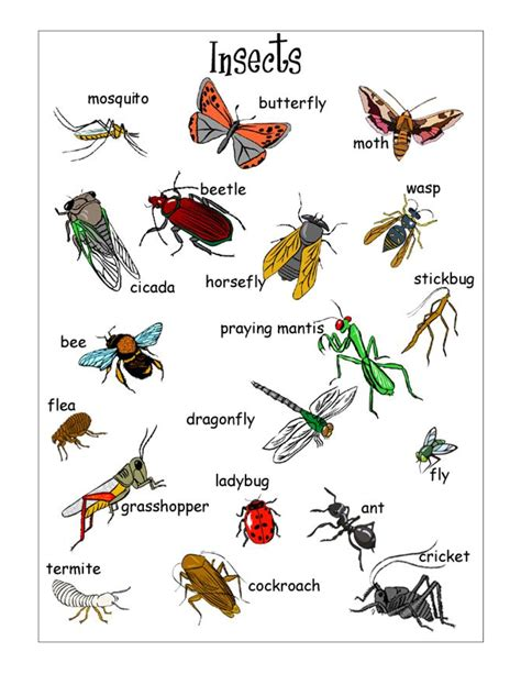 printable insect poster insects worksheets free insect vocabulary worksheet