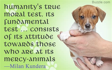 quotes about animals animal cruelty quotes quotes of the day