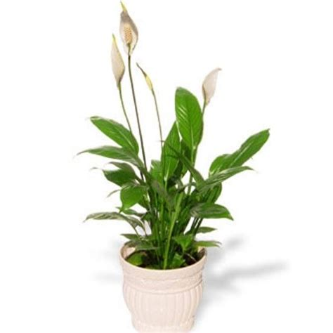 the best indoor plants 17 best images about house plants on pinterest indoor