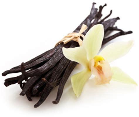 Decorative Sticks For The Home Mexican Vanilla Pure Authentic Mexican Vanilla