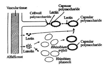 Similiar root hair cell diagram keywords root hair cell diagram publicscrutiny Choice Image