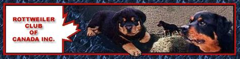 rottweiler club of connecticut rottweiler breeders rottweiler puppies for sale german rottweilers for sale