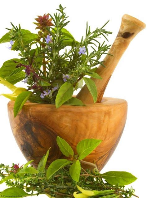 plantas medicinales remedios caseros medicina natural 191 que son las plantas medicinales plantas medicinales