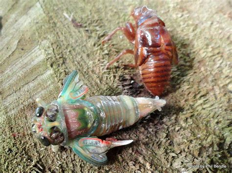 Insects That Shed Their Wings by T E R R A I N Taranaki Educational Resource Research
