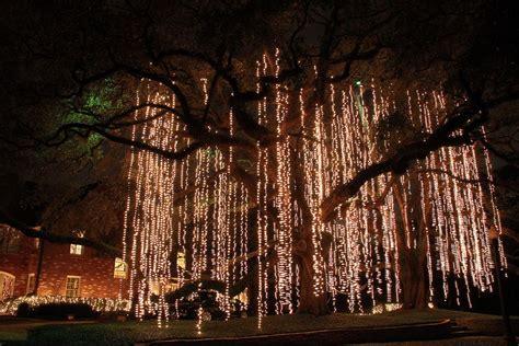 live oak lights light moss moss oak tree and