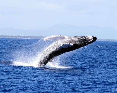 What Colour Goes With Grey by Top Five Largest Whales