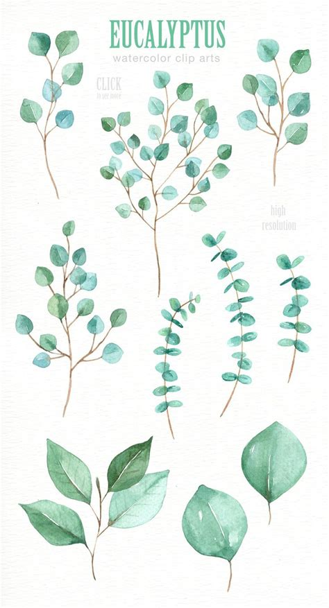 printable eucalyptus leaves eucalyptus leaf watercolor clipart by everysunsun on