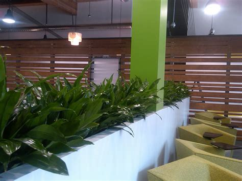 indoor landscaping plants for lobbies plants for offices courtyards and patios