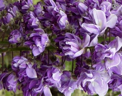 Fleurs Odorantes Pour Balcon by Fleurs Grimpantes Odorantes