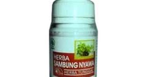 Sari Daun Dewa Gynura Procumbens Folium jual herba sambung nyawa