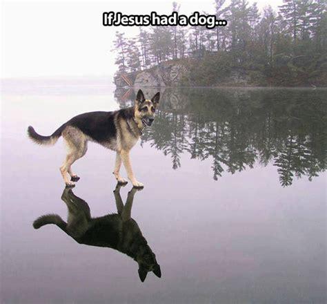 jesus in dogs jesus