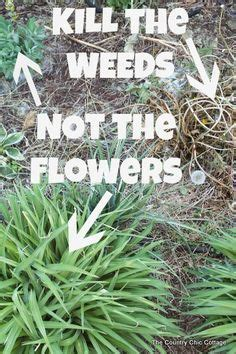 how to kill weeds in flower beds 1000 ideas about killing weeds on pinterest weed