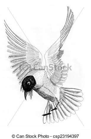 gabbiano uccello illustrazione gabbiano uccello mare carta gabbiano