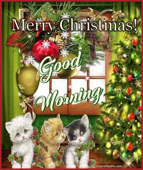cute cats merry christmas good morning quote pictures