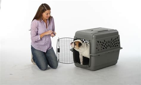 how to kennel your puppy tips for kennel a puppy properly