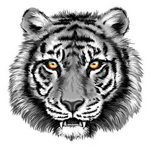 gray tiger head vector vector animal free download