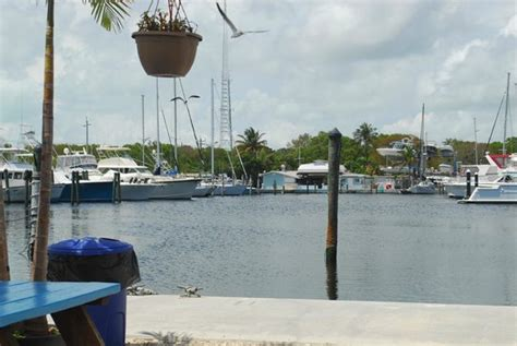 key largo fisheries backyard manatees visiting the cafe and retail market picture of
