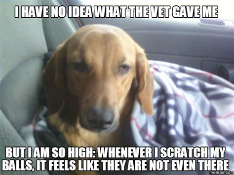 Dog Vet Meme - 192 best just for veterinary people images on pinterest