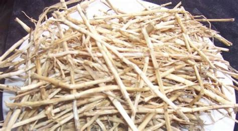 akar tanaman  bisa diracik sebagai ramuan obat