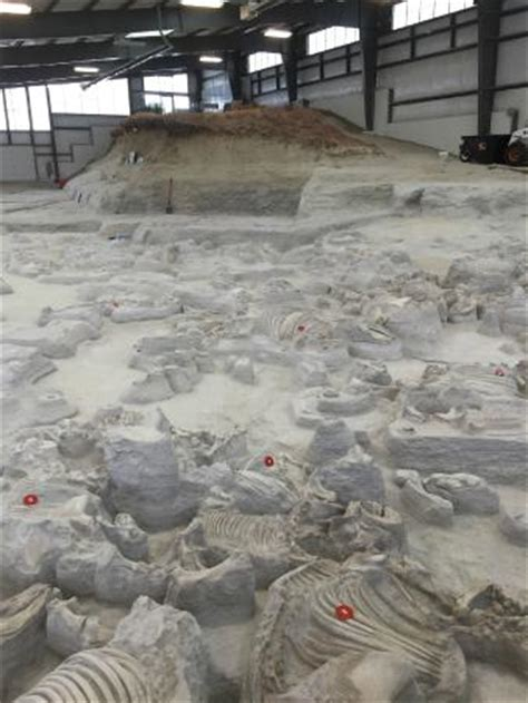 ashfall fossil beds state historical park resting easy picture of ashfall fossil beds state