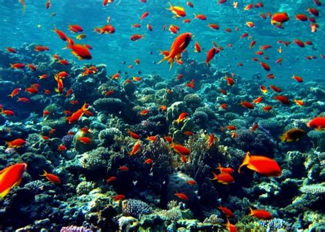 the coral sea the coral sea the most beautiful seas in the world
