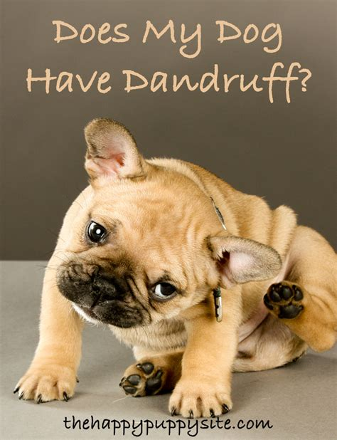 how to get rid of puppy dandruff how to get rid of dandruff the happy puppy site