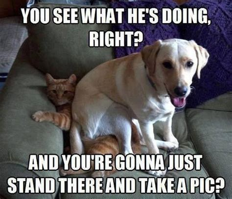 Hilarious Dog Memes - funny dog pictures that will make you smile