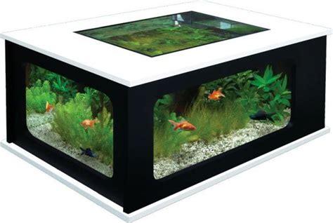 terrarium on coffee table