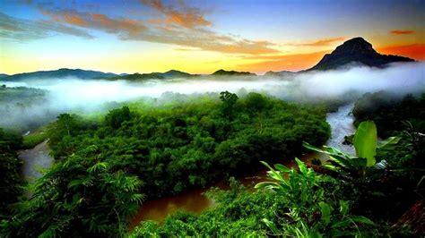 green wallpaper jakarta tropical rainforest mist evaporation green forest mountain