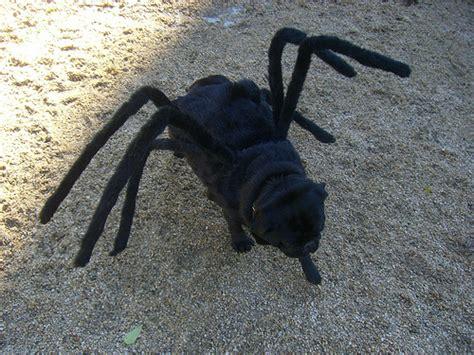 black pug spider costume gus the tarantula pug flickr photo