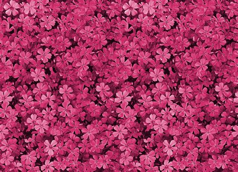 pics photos latest floral tumblr themes layouts and s for install allskinny pretty field of pink flowers tumblr