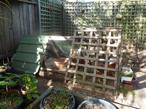 How To Keep Chickens In Your Backyard Sydney How To Keep Chickens In Your Backyard
