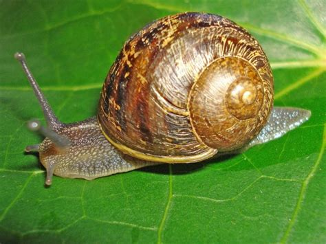 advice how to slugs and snails
