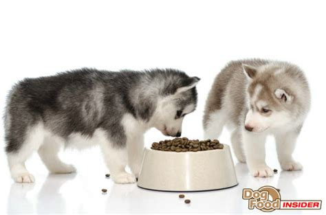 best food for siberian husky puppy what is the best food for your siberian husky food insider