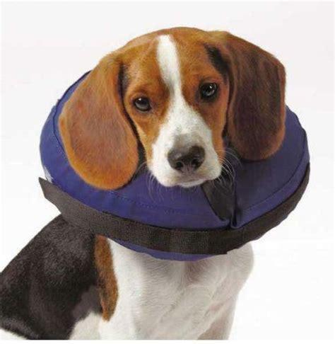 dog medical collar ebay