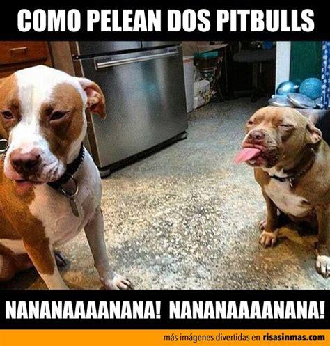 imagenes realmente graciosas muy buenas como pelean realmente dos pit bull humor e im 225 genes
