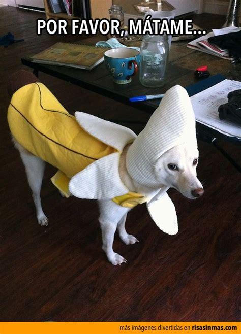 mujer se pega con perro mujer se pega con perro newhairstylesformen2014 com