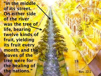 12 fruits of the tree of a study of revelation page 35 of 37 what do the