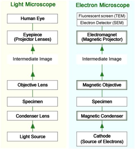 Difference Between Light Microscope And Electron Microscope by Light Microscope Vs Electron Microscope Compare Light